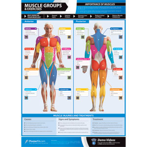 PosterFit Muscle Groups & Exercises Poster